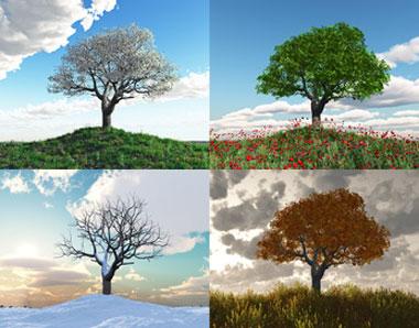 Baum in den 4 Jahreszeiten